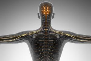 MOVILIZACION-SISTEMA-NERVIOSO-02-imagen clínica rehabilitación - navarra - pamplona - accidentes de tráfico